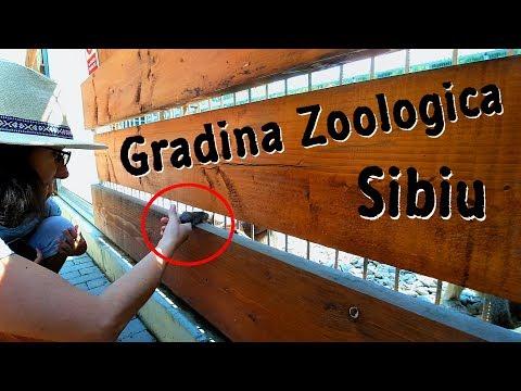 O maimuta de la Gradina Zoologica din Sibiu era sa-mi fure paravantul de la microfon