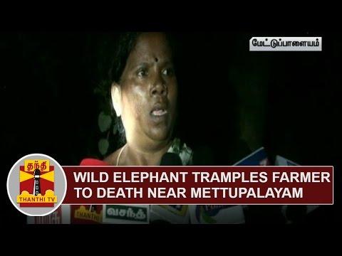 Wild-Elephant-tramples-Farmer-to-Death-near-Mettupalayam-Thanthi-TV