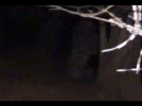 Large Bigfoot Sighting 2016