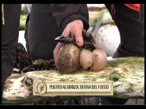 Tierra del Fuego Parte 1, MPMC