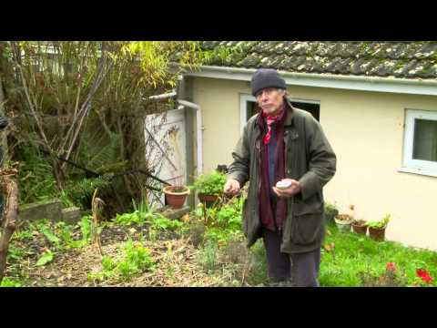 Growing Vegetables – Crop rotation and green manure with Patrick Whitefield – Video 7