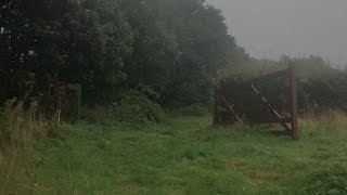 Rainy Day in the English Countryside | Rain Sounds & Distant Thunder for Reading, Study or Sleep