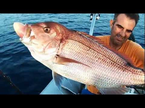 grouper snapper ΨΑΡΕΜΑ ΑΠΟ ΤΟΝ ΣΩΤΟ sotos fishing.wmv