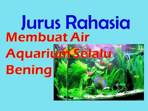 Membuat Air Aquarium Sebening Kristal