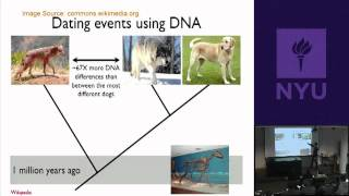 Natural Science II: Genomes And Diversity - Animal Genomics&Origin Of Domestic Dogs