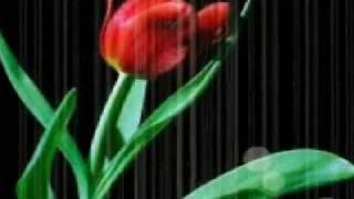 JesÚs Es Mi Pastor - Musica Cristiana - Leo Dan
