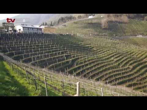 TV Gastro&Hotel: Navštívili jsme sýrárnu PER v Itálii