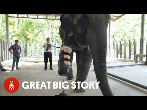 這隻大象曾被地雷炸掉一條腿,當專家嘗試為牠裝上義肢後,看到牠走動時我眼淚都噴出來了!