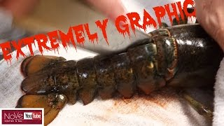 EXTREMELY GRAPHIC: Maine Lobster Dynamite - How To Make Sushi Series by Diaries of a Master Sushi Chef