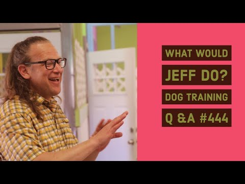 Fearful dog training | Dog freaks around visitors | What Would Jeff Do? Dog Training Q & A #444