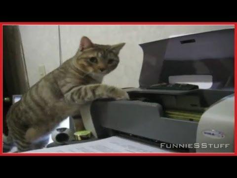Gato vs. Impresora (La clásica batalla)
