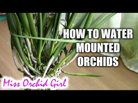 How to water mounted orchids (видео)