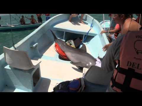 Dolfijn gered na kort bezoekje aan boord