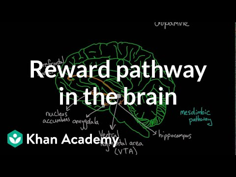 Reward pathway in the brain video khan academy ccuart Image collections