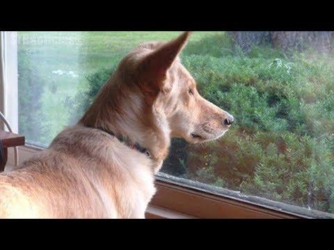 Perro mira por la ventana a diario, cuando la dueña finalmente descubre porqué, su corazón se rompe.