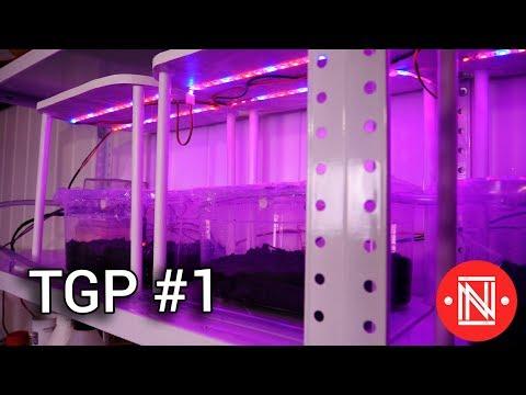 Automated Indoor Garden  (The Garden Project ep. 1) (видео)