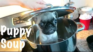 No Puppies were cooked in the making of this video!! I decided to prank my brother, Alex Wassabi with Puppy Soup!! Be sure to turn on your NOTIFICATION so ...