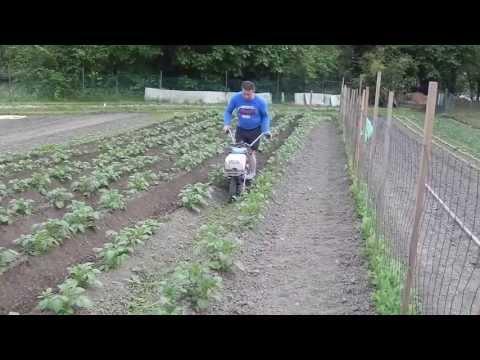 buttage des pommes de terre avec staub RM6