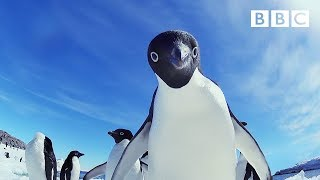 Nonton Ad  Lie Penguins Wreak Havoc   Snow Chick  A Penguin S Tale Preview   Bbc One Christmas 2015 Film Subtitle Indonesia Streaming Movie Download