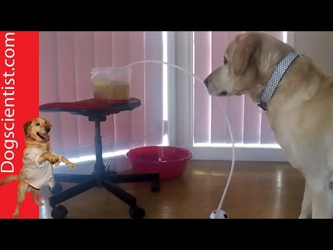 Dog Gets Soup Through A Siphon