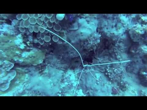 Komodo Diving