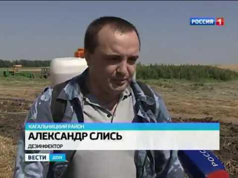 На Дону уничтожили две тонны дикорастущей конопли
