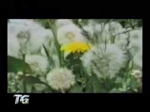 allergie ai pollini, ecco alcuni accorgimenti!