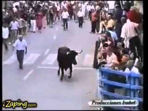 a bull recognizes among hundreds of people who took care of him