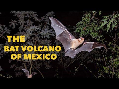 Ένα «ηφαίστειο» από νυχτερίδες εκρήγνυται στο Μεξικό