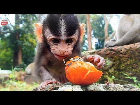 What makes baby smell this fruit? Funny face cute baby/ A bit cry miss mum Youlike Monkey 1344