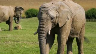 Noah's Ark Zoo Farm is the largest Zoo in the south west and home of the big zoo animals. Come along and visit our Elephants,...