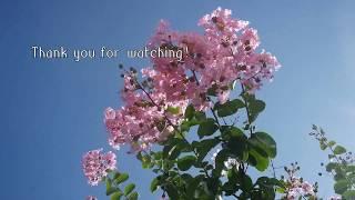 * 봄에서  여름까지의  영상들을  모아  보았습니다 !*즐겁게  시청해  보세요 !*Thank  you for  watching ! * 👐  !