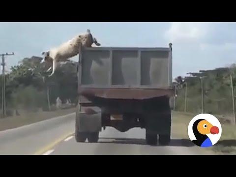 Animals that refused to die
