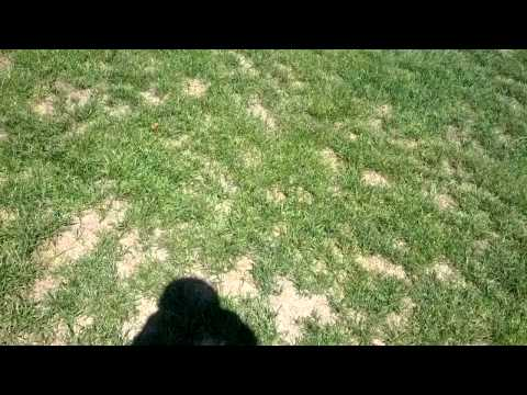 LawnCareMidwest -