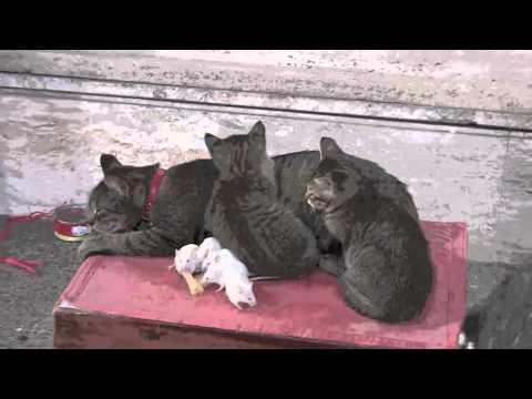 gatti e topolini