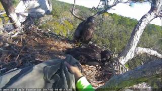 """""""Peace"""" Rescued from NEFL Nest • 2-10-17"""