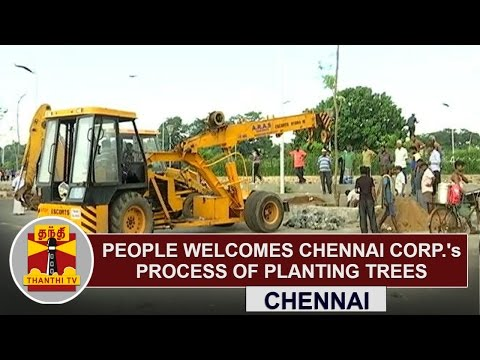 People-Welcomes-Chennai-Corporations-process-of-planting-trees-across-City-Thanthi-TV