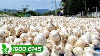 Nông nghiệp | Những bất cập, vướng mắc trong xây dựng bảo vệ thương hiệu nông sản