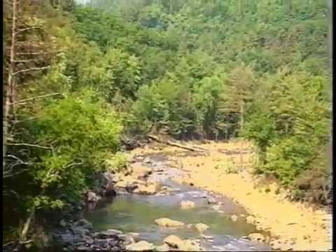 Spawning Nests of the Bluehead Chub (видео)
