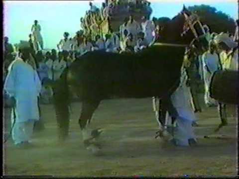 Alamgir Mohammad Khan - chakwal horse dance Ustad Ghulam Muhammad Khan.