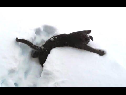 Pisici prin zăpadă