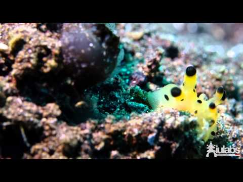 Bali Dive Trip 2014 - Padang Bai, Tulamben