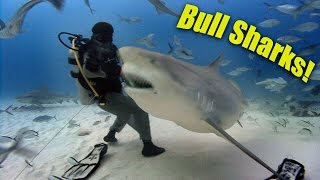 Jonathan travels to Mexico for an up close encounter with Bull sharks, infamous for the fact that they are known to be the most dangerous species of shark to humans.   He gets to try a chain mail anti-shark suit, and meets a biologist who is studying the sharks to learn more about their population and habits.This is an HD re-release of the most popular Blue World episode!JONATHAN BIRD'S BLUE WORLD is an Emmy Award-winning underwater science/adventure program that airs on public television in the United States.**********************************************************************If you like Jonathan Bird's Blue World, don't forget to subscribe!Support us on Patreon!http://patreon.com/BlueWorldTVYou can buy some Blue World T-shirts & Swag!http://www.blueworldtv.com/shopYou can join us on Facebook!https://www.facebook.com/BlueWorldTVTwitterhttps://twitter.com/BlueWorld_TVInstagram@blueworldtvWeb:http://www.blueworldTV.com**********************************************************************