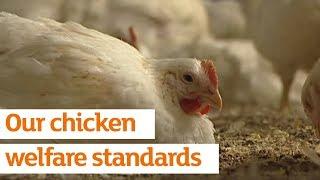 Our chicken welfare standards