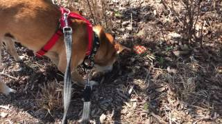 Mar 16, 2017 ... Adopt Squirrel. Adopt a Shelter Dog or Cat! ... Man Becomes Unlikely Best nFriends with Baby Squirrel After Saving His Life - Duration: 1:47.