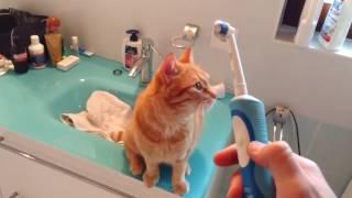 animale pisica si periuta electrica