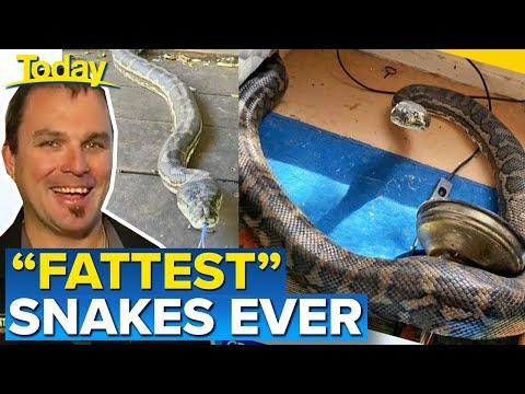 Twee vechtende slangen door je plafond :o