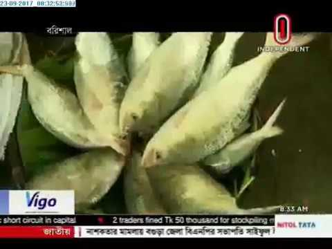 1:52 Thriving business of Hilsa (23-09-2017)