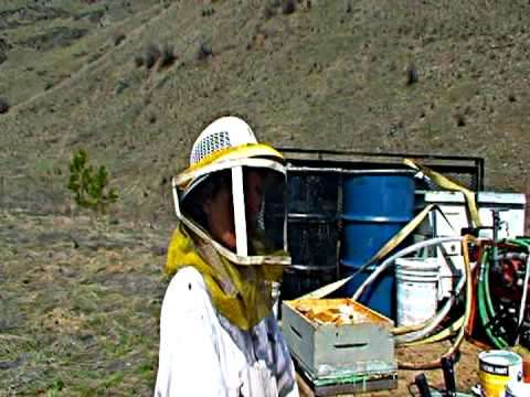 Queen Bee & Research to save our Bees