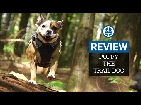 Mountain Bike Reviewer Reviews His Trail Dog